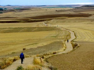 Endless Camino Path